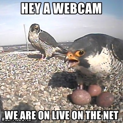 #CEFalcons - hey a webcam we are on live on the net