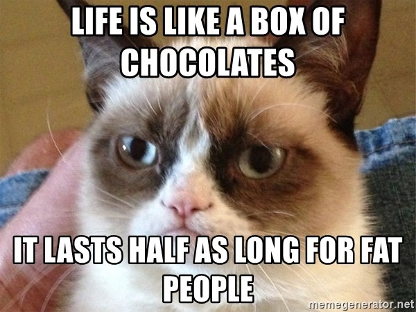 Angry Cat Meme - life is like a box of chocolates it lasts half as long for fat people