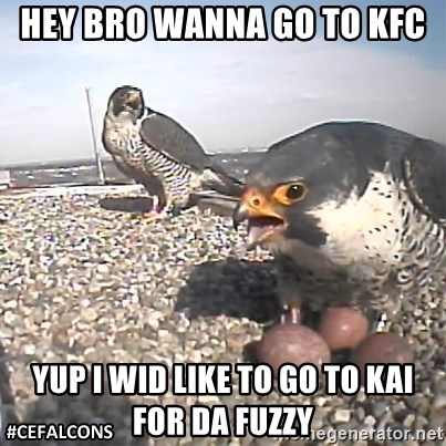 #CEFalcons - HEY BRO WANNA GO TO KFC YUP I WID LIKE TO GO TO KAI FOR DA FUZZY
