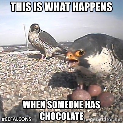 #CEFalcons - THIS IS WHAT HAPPENS WHEN SOMEONE HAS CHOCOLATE