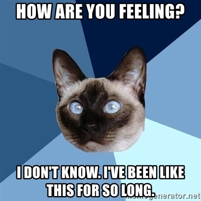 Chronic Illness Cat - How are you feeling? I don't know. I've been like this for so long.