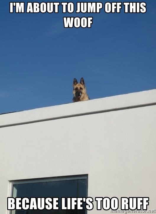 Roof Dog - I'm about to jump off this woof Because Life's Too Ruff