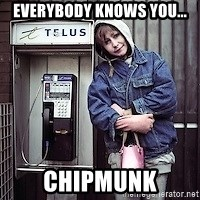 ZOE GREAVES TIMMINS ONTARIO - EVERYBODY KNOWS YOU... CHIPMUNK
