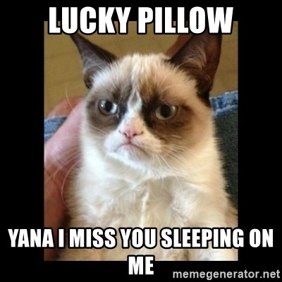 Frowning Cat - lucky pillow Yana I miss you sleeping on me