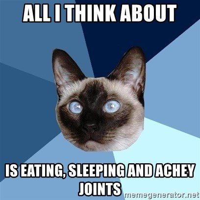 Chronic Illness Cat - All i think about is eating, sleeping and achey joints
