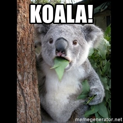 Koala can't believe it - KOALA!
