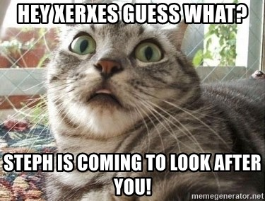 scared cat - HEY XERXES GUESS WHAT? STEPH IS COMING TO LOOK AFTER YOU!