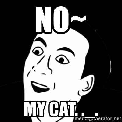 you don't say meme - No~ My cat. ._.