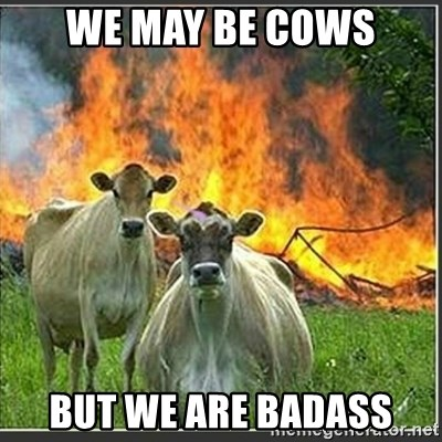 Evil Cows - we may be cows but we are badass