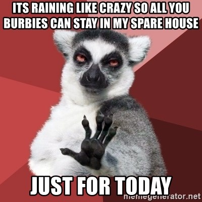 Chill Out Lemur - Its raining like crazy So All you burbies can stay in my spare house Just for today