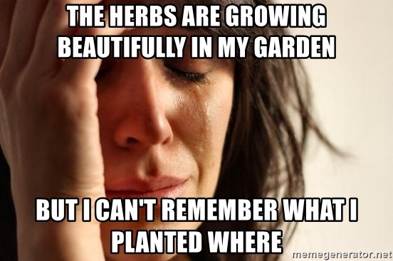 First World Problems - the herbs are growing beautifully in my garden But i can't remember what i planted where
