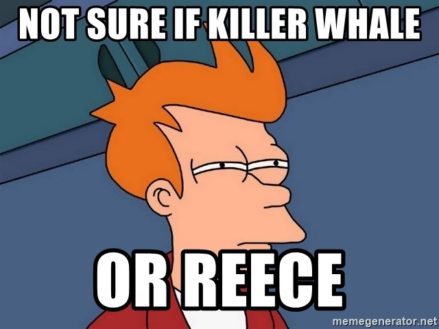Futurama Fry - not sure if killer whale or reece