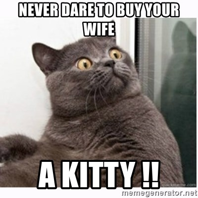 Conspiracy cat - never dare to buy your wife a kitty !!