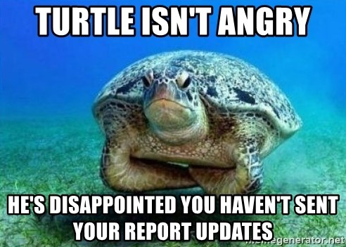 disappointed turtle - TURTLE ISN'T ANGRY HE'S DISAPPOINTED YOU HAVEN'T SENT YOUR REPORT UPDATES