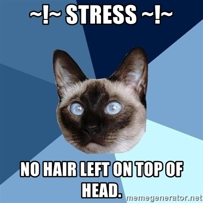 Chronic Illness Cat - ~!~ Stress ~!~ No hair left on top of head.