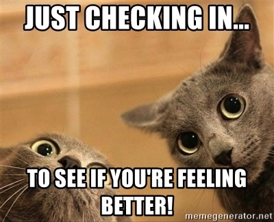 Just Checking In To See If You Re Feeling Better Curious Cats Meme Generator