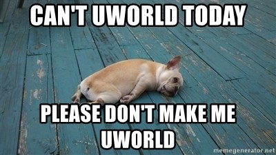 Can't UWORLD today Please don't make me UWORLD - Dog Laying