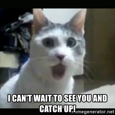 I Cant Wait To See You And Catch Up Surprised Cat Meme