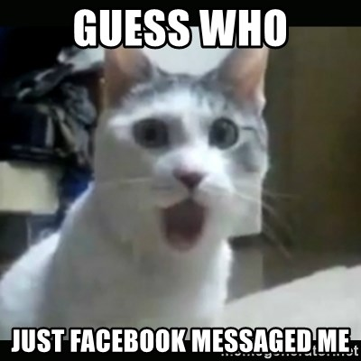 Surprised Cat - Guess who Just Facebook messaged me