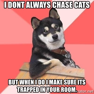 Cool Dog - i dont always chase cats but when i do i make sure its trapped in your room.
