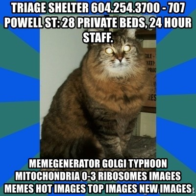 AMBER DTES VANCOUVER - Triage Shelter 604.254.3700 - 707 Powell St: 28 private beds, 24 hour staff. MemeGenerator golgi typhoon mitochondria 0-3 ribosomes Images Memes Hot Images Top Images New Images