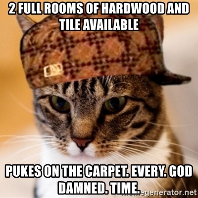 2 Full Rooms Of Hardwood And Tile Available Pukes On The Carpet
