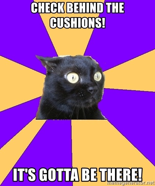 Anxiety Cat - check behind the cushions! it's gotta be there!