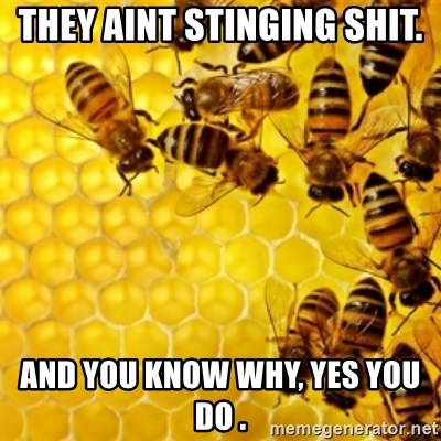 Honeybees - They aint stinging shit. And you know why, yes you do .