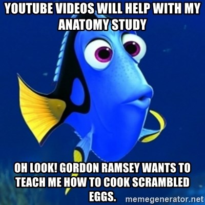 Youtube videos will help with my anatomy study Oh look! gordon ...