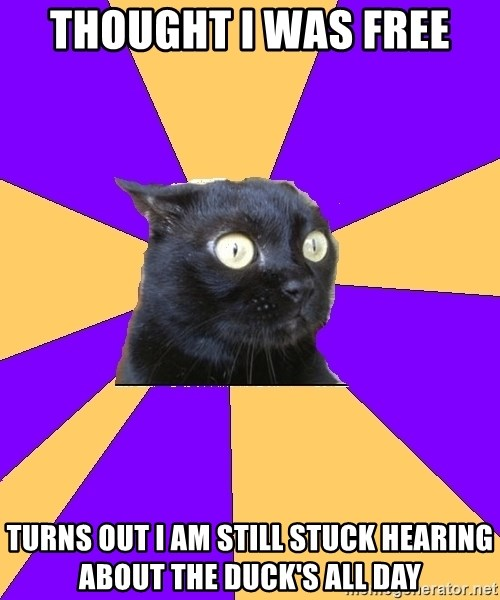 Anxiety Cat - Thought I was free Turns out I am still stuck hearing about the Duck's all day