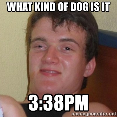Really highguy - what kind of dog is it 3:38PM