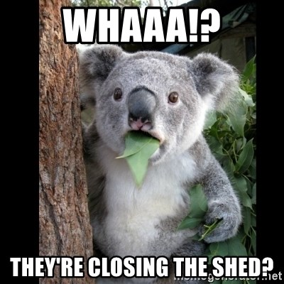 Koala can't believe it - Whaaa!? They're closing the shed?