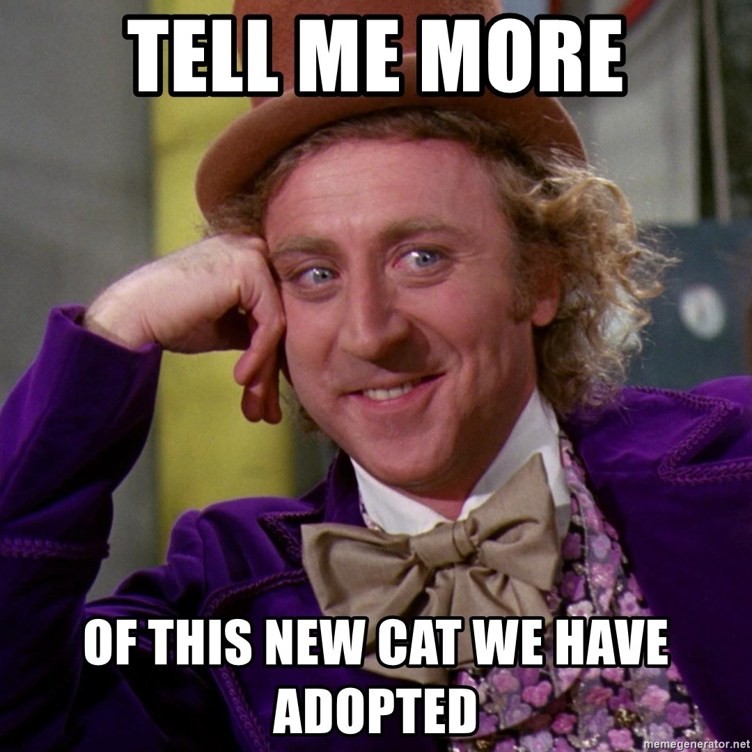 Willy Wonka - tell me more of this new cat we have adopted
