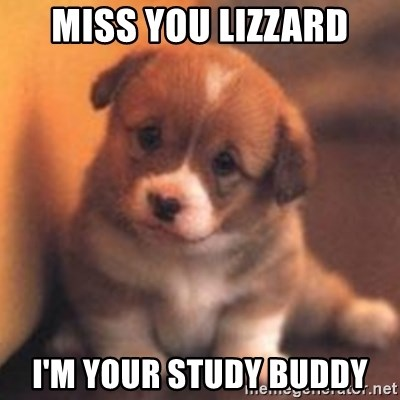 cute puppy - Miss you lizzard I'm your study buddy