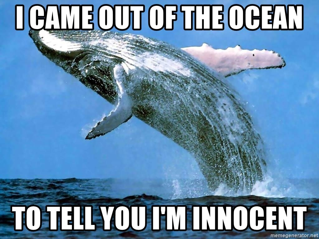 whaleeee - I came out of the ocean to tell you i'm innocent