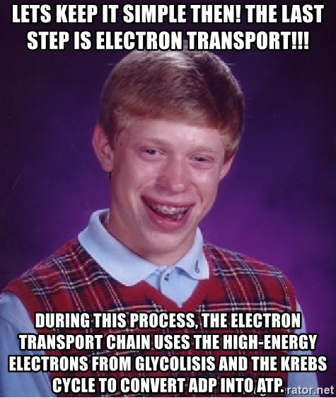 Bad Luck Brian - LETS KEEP IT SIMPLE THEN! tHE LAST STEP IS ELECTRON TRANSPORT!!! DURING THIS PROCESS, THE ELECTRON TRANSPORT CHAIN USES THE HIGH-ENERGY ELECTRONS FROM GLYCOLISIS AND THE kREBS CYCLE TO CONVERT adp INTO atp.