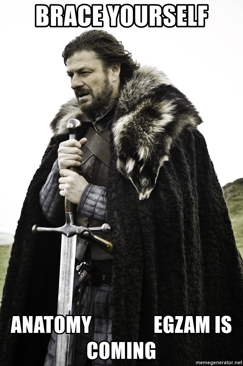 Sean Bean Game Of Thrones - Brace yourself Anatomy                egzam is coming