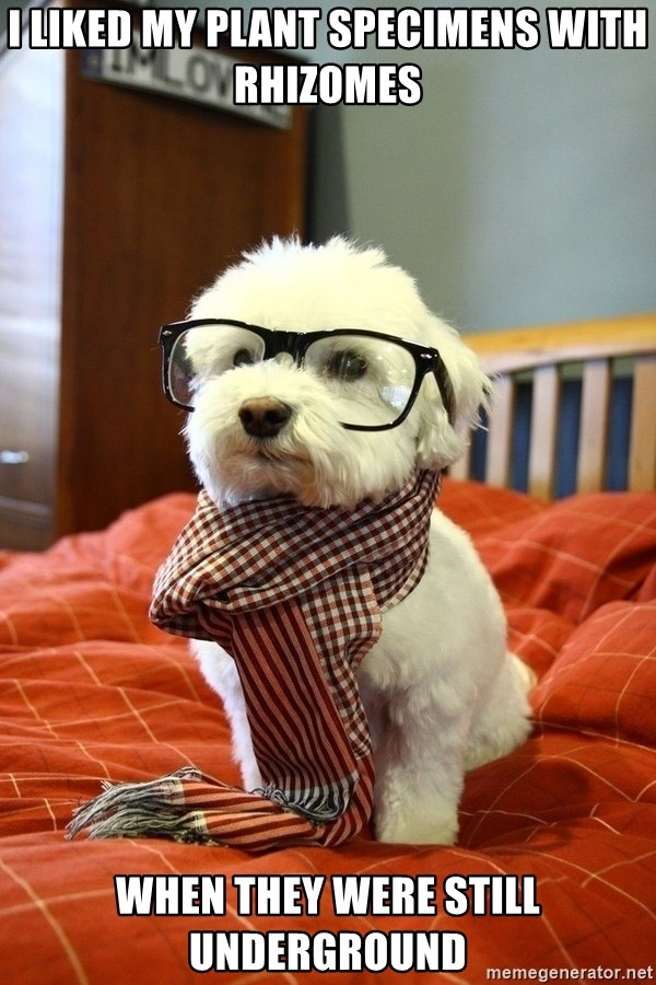 hipster dog - I liked my plant specimens with rhizomes when they were still underground