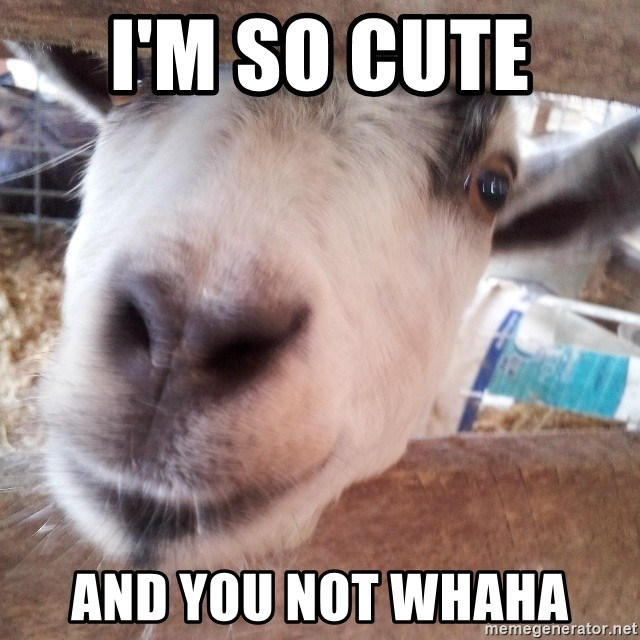 Animals with song quotes - i'm so cute  and you not whaha