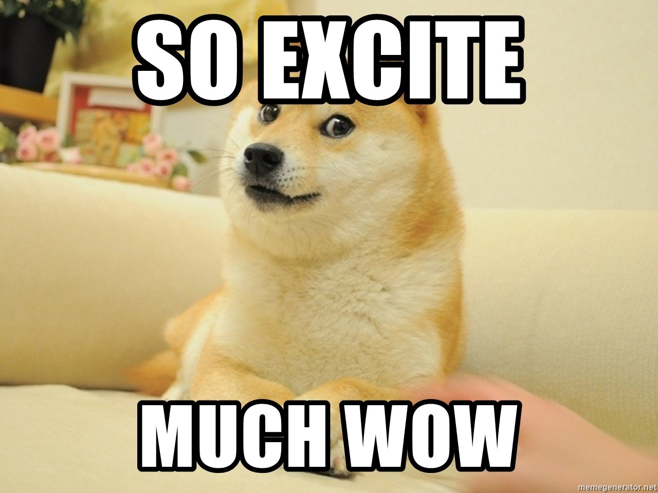 so doge - So Excite Much wow