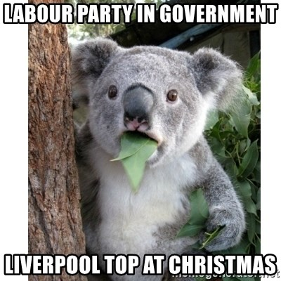 surprised koala - labour party in government liverpool top at christmas
