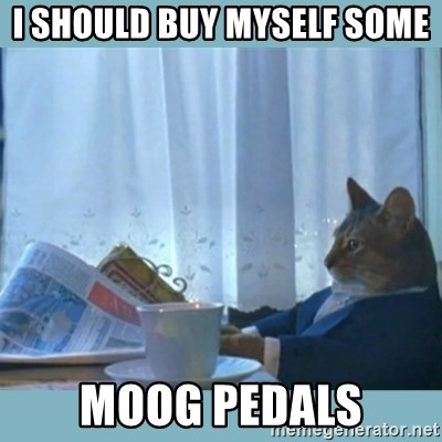 rich cat  - I should buy Myself some  Moog pedals
