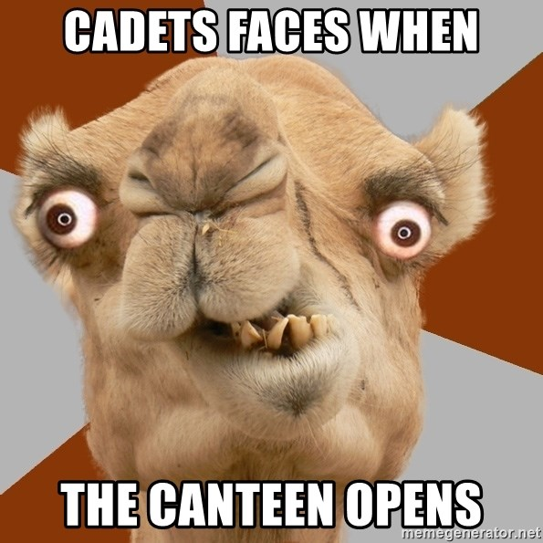 Crazy Camel lol - cadets faces when the canteen opens