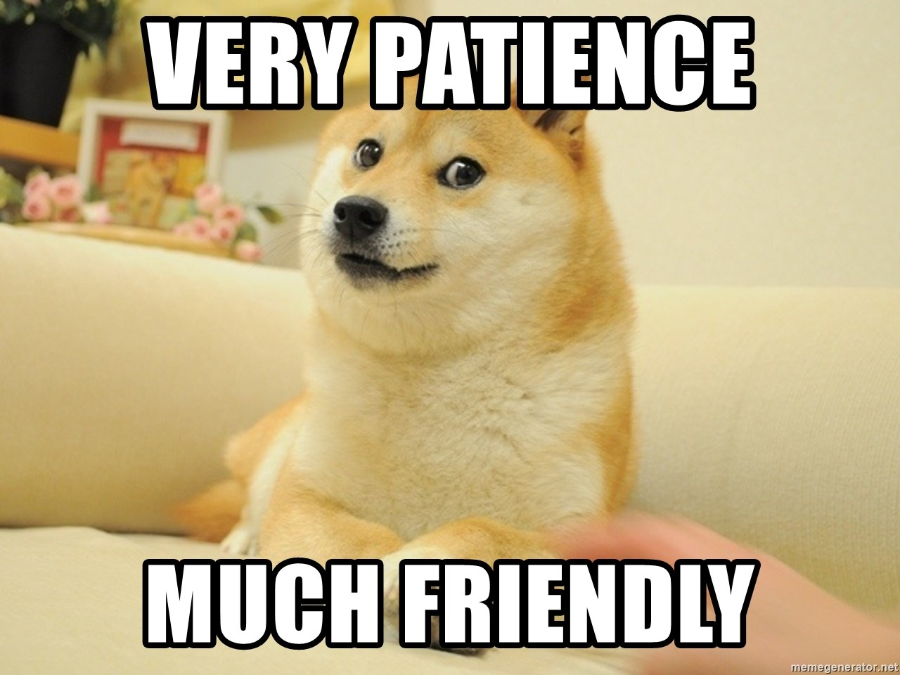 so doge - Very patience Much friendly