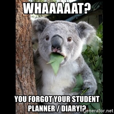 Koala can't believe it - whaaaaat? you forgot your student planner / diary!?