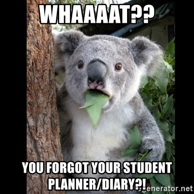 Koala can't believe it - whaaaat?? you forgot your student     planner/diary?!
