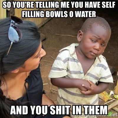 Skeptical 3rd World Kid - so you're telling me you have self filling bowls o water and you shit in them