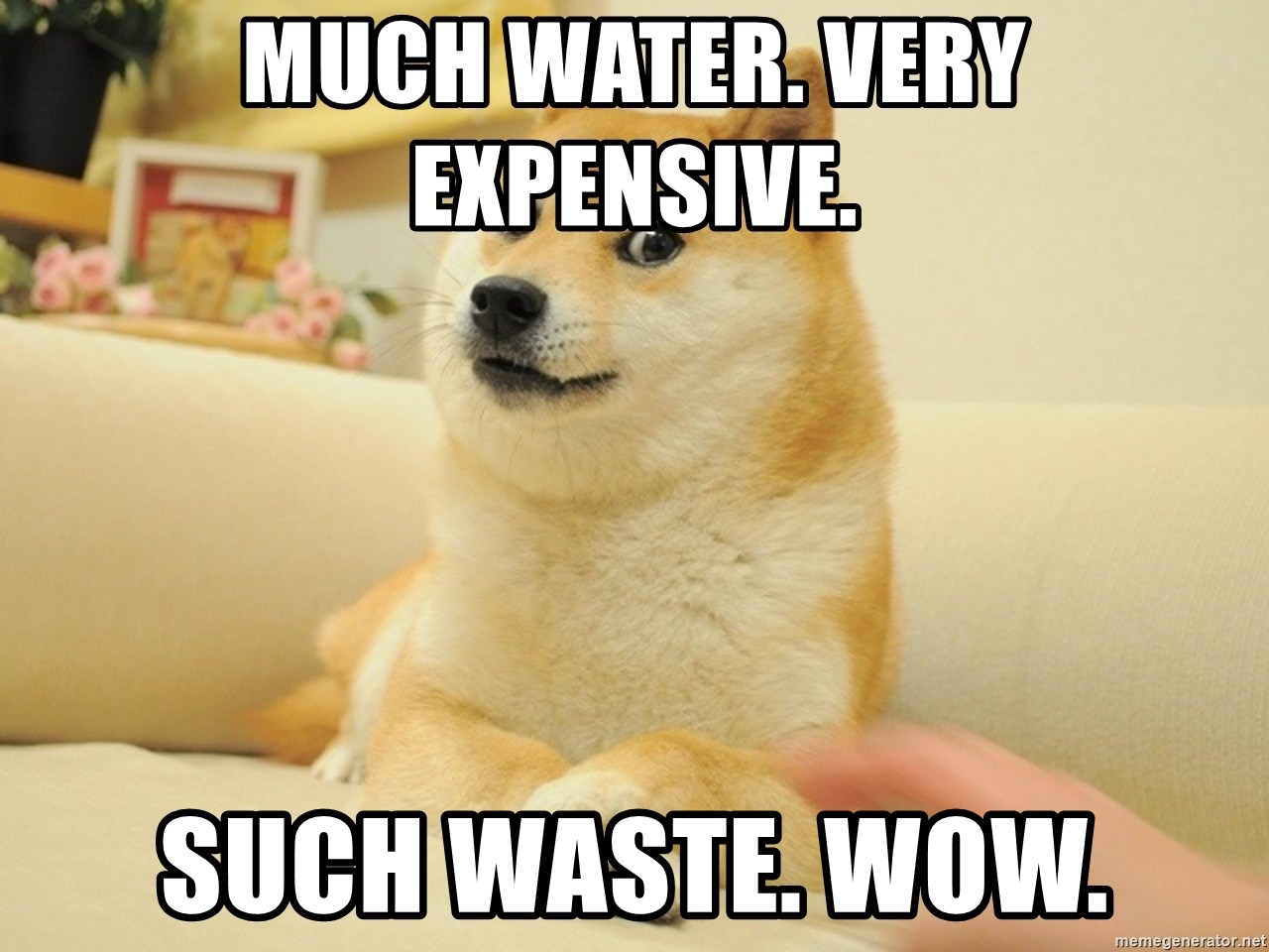 so doge - much water. very expensive. such waste. wow.