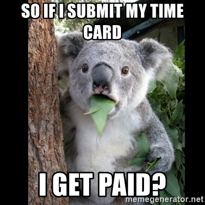 Koala can't believe it - so if i submit my time card i get paid?