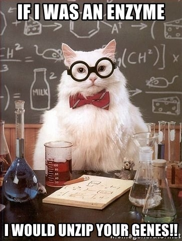 Chemistry Cat - If I was an enzyme  I would unzip your genes!!